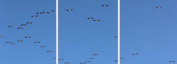 vogels en vrij